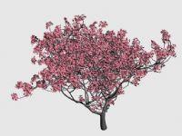 开满桃花的桃树3D模型