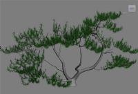 针叶树3D模型