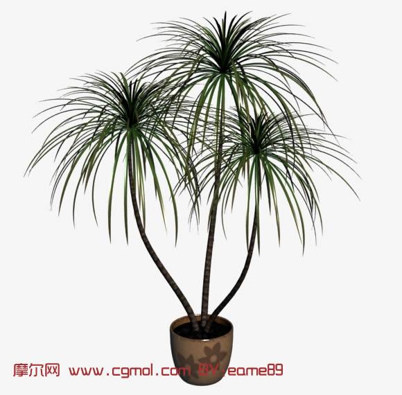 小松树,植物盆景,植物盆栽3d模型