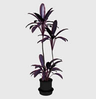 紫色花朵,植物盆景,植物盆栽3D模型