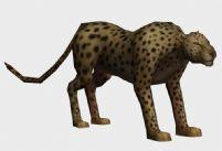 花豹,豹子,金钱豹3D模型
