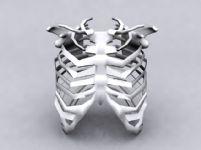 人肋骨,骨架3D模型