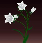 白色兰花3D模型