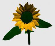 向日葵的3D模型