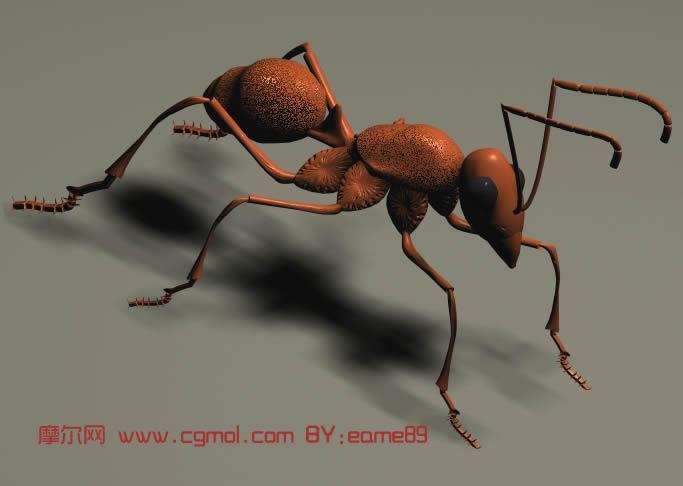 蚂蚁,3d动物模型