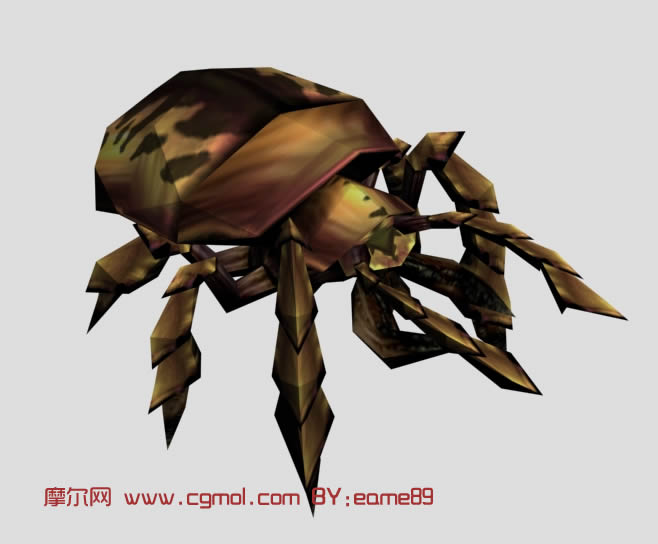 动物模型 昆虫