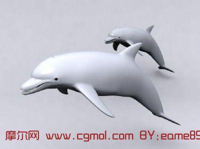 海豚3d模型,哺乳动物,动物模型