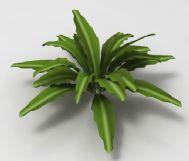 一棵绿色植物的3D模型