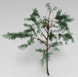 相思树3D模型