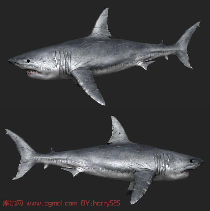 动物模型 鱼类动物  关键词:鲨鱼大白鲨 作品描述: 作者其他作品 上一