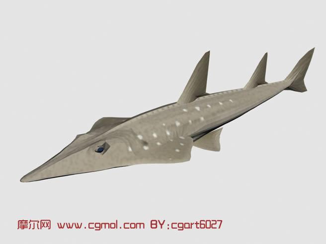 身体扁平的鱼3d模型,鱼类动物