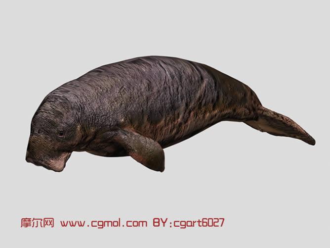 海狮3d模型,鱼类动物,动物模型