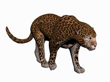 金钱豹,花豹,豹子3d模型