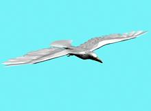 鸟,雨燕3d模型