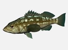某种鱼的3d模型
