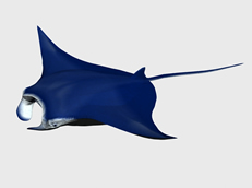 蝠鲼鱼3d模型