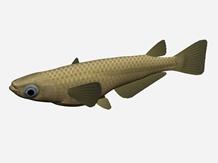青�鱼3d模型