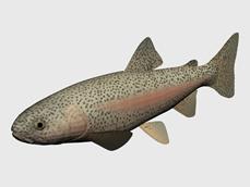 彩条鱼3d模型