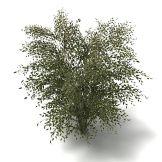 有点像竹子的树模型