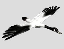 天鹅3d模型