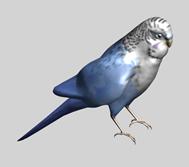 长尾小鹦鹉3d模型