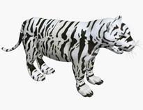 白虎,孟加拉虎3d模型