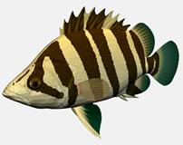 条纹鱼3d模型
