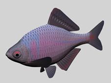 彩色鱼3d模型