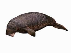 海狮3d模型