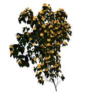 开满黄花的树,3d植物模型