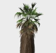 板棕树,棕榈树3d模型