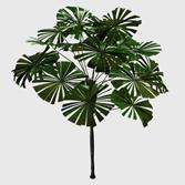 马尾棕,竹节棕,棕榈树3d模型