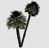 小棕榈树3d模型
