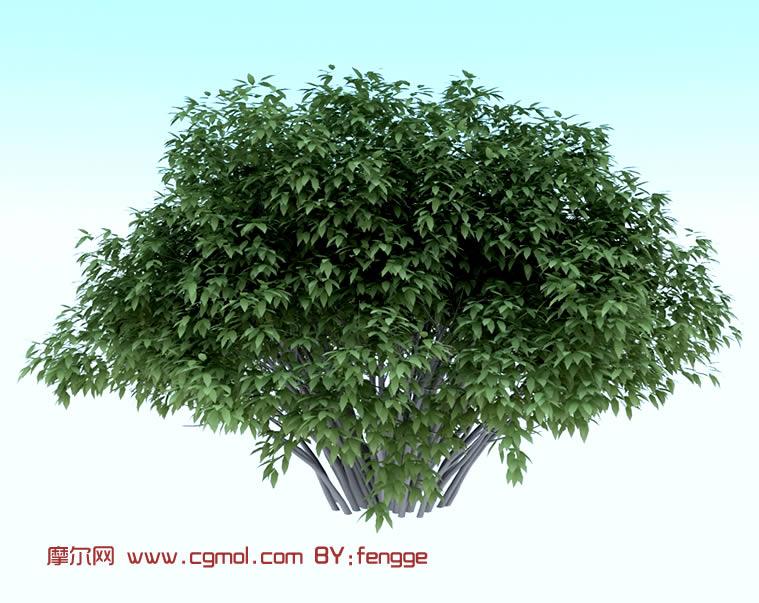 某种树的3d模型