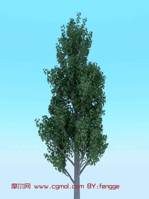 樟树3d模型