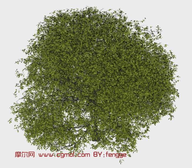 桑树3d模型