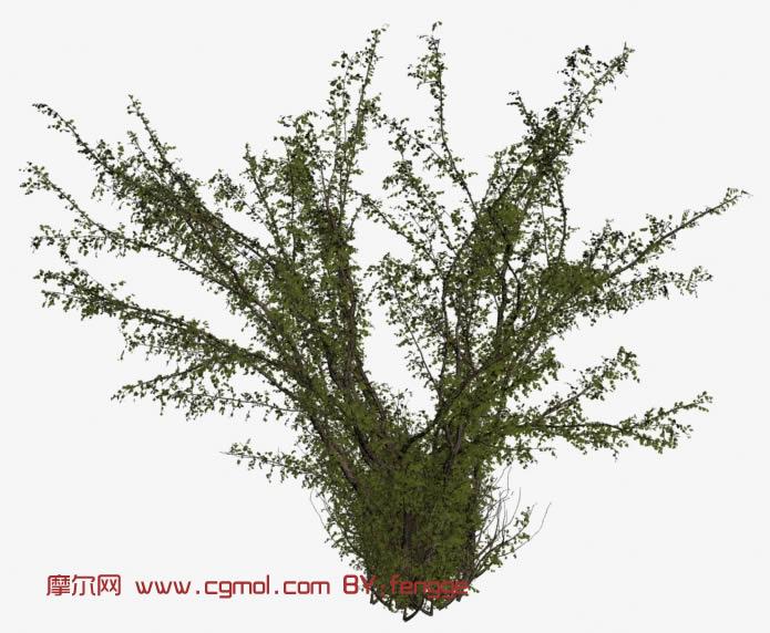 灌木树3d模型
