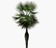 海南棕榈树3d模型
