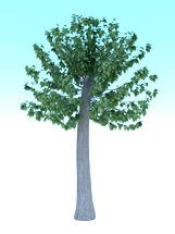 城市环保梧桐树3d模型