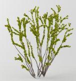 开小花的树3d模型