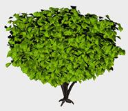 绿色大树3d模型