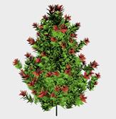 开花的树3d模型