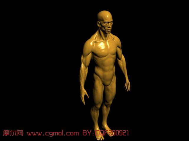 人体 肌肉/关键词:人体肌肉...
