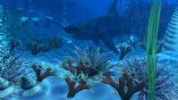 真实海底,海底世界,maya场景模型