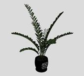 金钱树植物盆栽3D模型