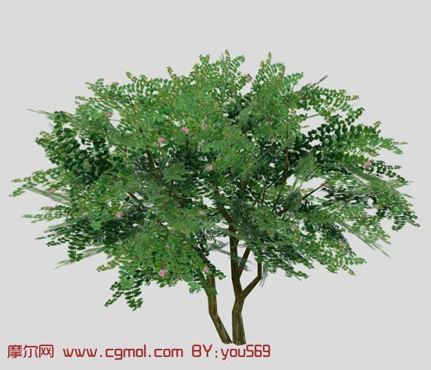 百日红,紫薇,3d树木模型