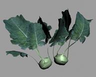 绿色蔬菜3D模型