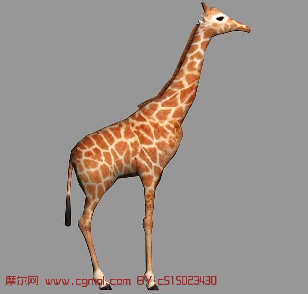 长颈鹿max模型,哺乳动物,动物模型,3d模型免费下载,cg