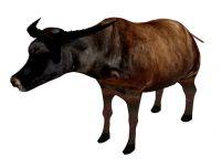 水牛,公牛3D模型