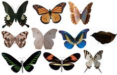 一组蝴蝶3D模型